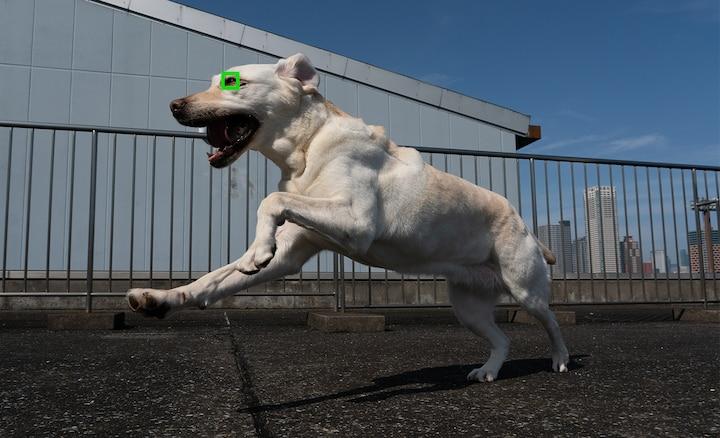 Ảnh chú chó được chụp bằng tính năng Lấy nét tự động theo ánh mắt trong thời gian thực