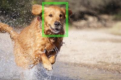 Hình ảnh điều chỉnh khóa lấy nét tự động