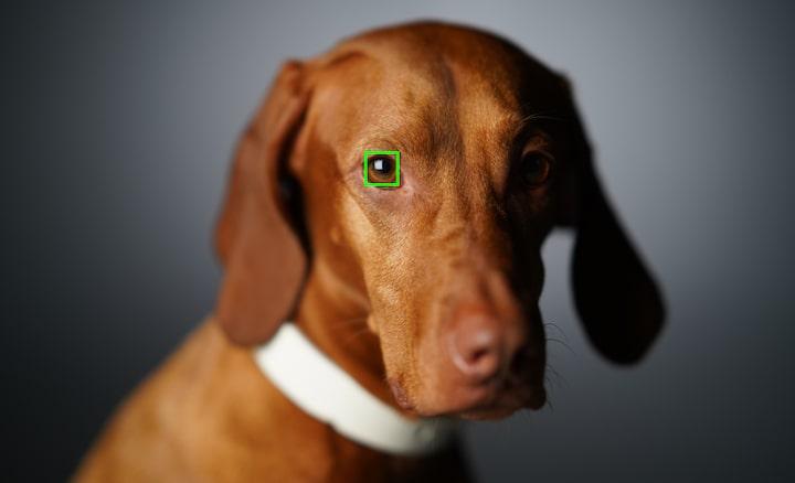 AF ánh mắt động vật trong thời gian thực hỗ trợ chụp ảnh