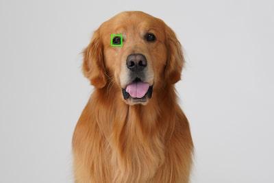 Hình ảnh động vật tuyệt đẹp nhờ tính năng Lấy nét tự động theo ánh mắt động vật trong thời gian thực
