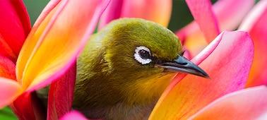 Hình ảnh chú chim thể hiện chi tiết ảnh 4K